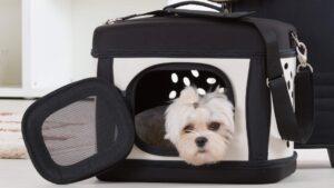 Malta para perros de Mercadona - Valoraciones